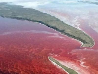 紧急通知!福建这片海域发生有毒赤潮!
