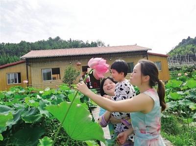柘荣县城郊乡际头村成片荷花吸引不少游客前去观赏