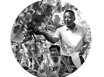 """省市县关工委实施""""种子工程"""" 把栽培技术送到葡萄架下"""