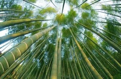 福安绿竹现代产业园项目通过验收