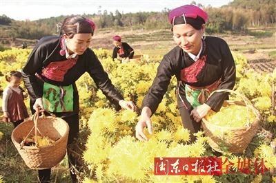 霞浦县水门畲族乡大力发展现代观光农业产业