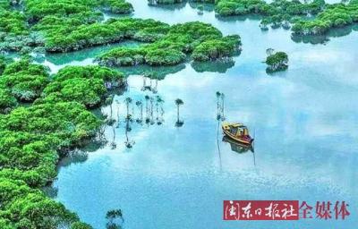 霞浦的这片湿地红树林如梦如幻美若仙境