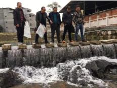 修复河道生态 晓阳1000斤鱼苗游入凤过溪
