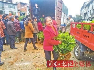竹管垅:免费发放优质茶苗