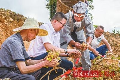 庆祝改革开放40周年之乡镇篇 ▏柘荣英山:山川添秀色 产业上新阶