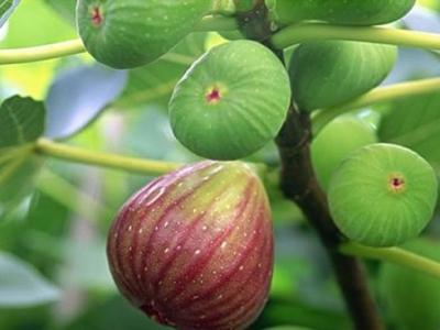 富溪村:种水果 助脱贫