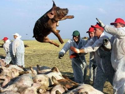 农业农村部:当前非洲猪瘟疫情没有流行蔓延