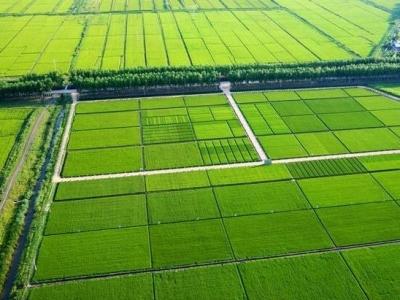 三门桥村:农田建设助推乡村振兴