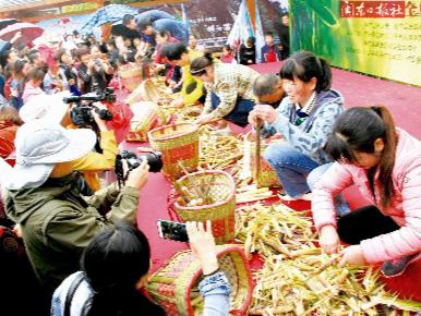 寿宁托溪:采笋节体验浓浓野趣