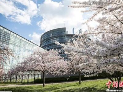 来不及脱欧? 英政党展开欧洲议会选举竞选活动