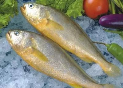 破难题 谋发展 话未来——专家学者为我市大黄鱼产业发展把脉问诊