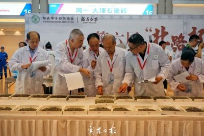 福鼎举办白茶斗茶赛   助力白茶产业发展