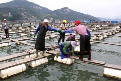 市领导赴福鼎开展海上养殖综合整治一线考核