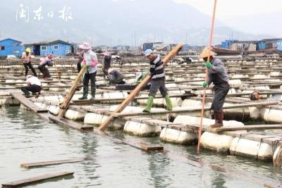 蕉城区强制拆除禁养区抢建渔排