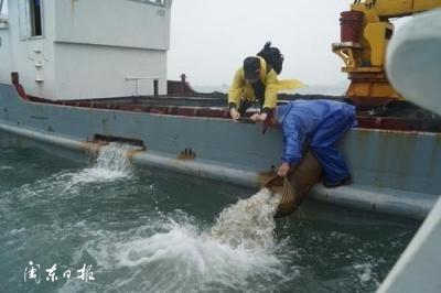 市海洋与渔业局开展大黄鱼苗种增殖放流活动
