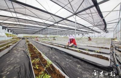屏南熙岭乡塘后村生态农业种植应用现代农业技术助力乡村振兴
