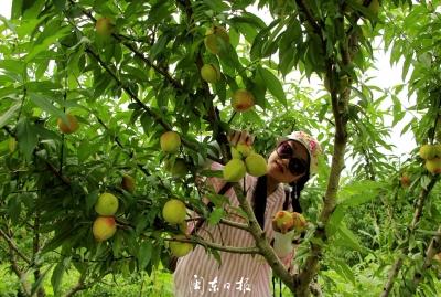 武曲镇实现农村经济多元化发展,年新增产值近7000万元