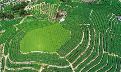 """农业专家""""进千村入万户""""助力乡村产业振兴"""
