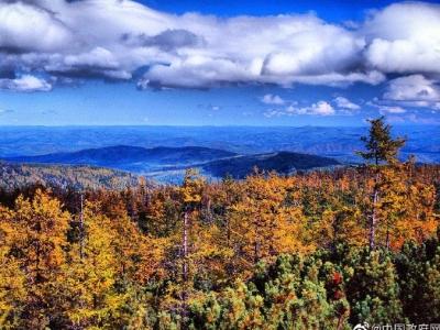 我国天然林将迎来最严格管制