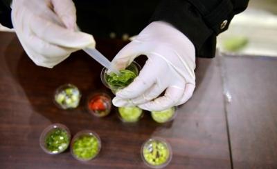 食品农药残留限量新国标发布,所限品种数量首超国际食品法典