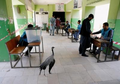 阿富汗第四次总统选举投票延迟结束 多地发生袭击