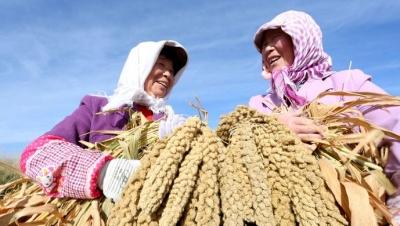 """在第二个""""中国农民丰收节""""到来之际 习近平向全国广大农民和工作在 """"三农""""一线的同志表示诚挚问候"""