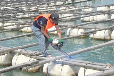 清海动真格!蕉城1000口非法渔排被依法拆除