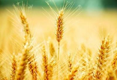 福建21个产粮大县获粮食风险金补助5000万  宁德古田县在列