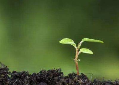 """农村青年致富""""种子工程""""茶园管理技术培训班举办"""