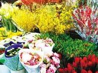 宁德市迎新花卉及伴手礼推广月活动20日启动