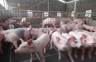 生猪稳产保供 成今明两年农业工作重中之重