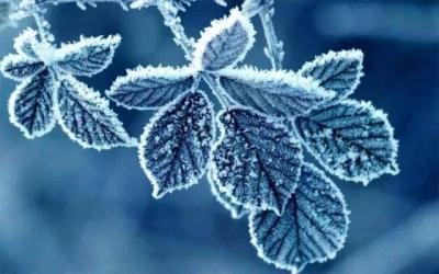 零下5.9℃!早晨宁德出现今冬最低温,这些事你可要注意了......