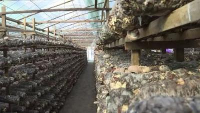 屏南:专业运作促销售 解决农产品难卖