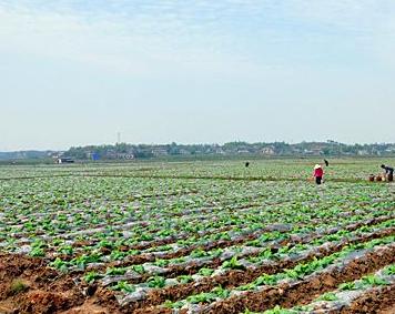 全国农民合作社整县推进试点名单公布 福安市入选