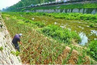 福安严禁占用城市公共场地和河滩地种植农作物