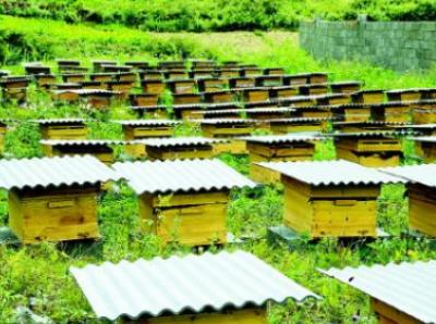 柘荣宅中:蜜蜂养殖助脱贫