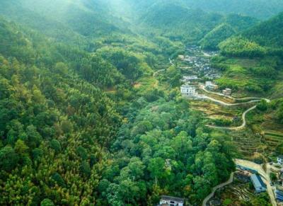 正公示!福建这15个镇拟命名为省级森林城镇,宁德5个上榜
