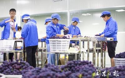 我市7个农产品品牌入选2019年度福建省著名农业品牌
