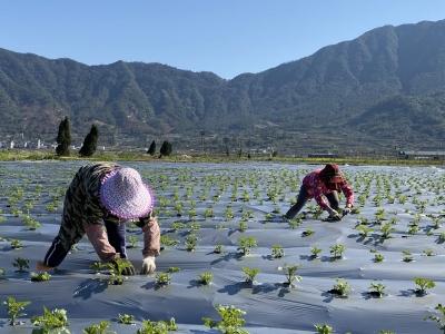 霞浦:抓好春季蔬菜生产