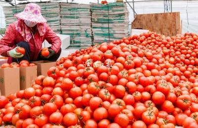 霞浦做好疫情防控期间蔬菜生产供应