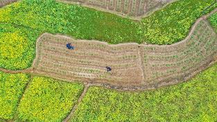 周宁县浦源镇龙住院村将大力发展锥栗、油茶等产业
