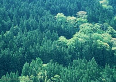 市林业局:全力推进造林绿化和松材线虫除治工作