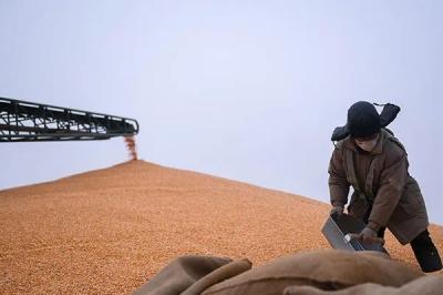 要不要囤米抢面?国家粮储局负责人回应