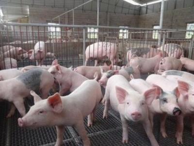 我市生猪价格走势已连续4周呈小幅度回落