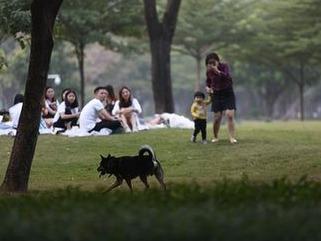农业农村部:狗已成为伴侣动物 不宜列入畜禽管理