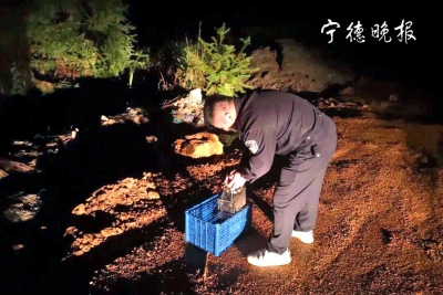 蕉城虎贝:深夜放生果子狸