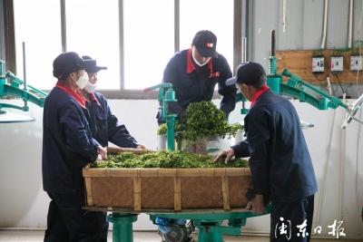 寿宁下党:梦之乡茶厂完成一期改造  预计为当地茶农增收4000元以上