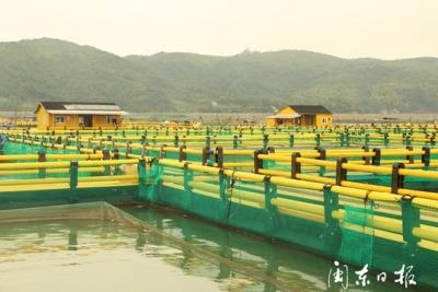 加快下水深水网箱,带动小网箱升级改造  霞浦全力推动海上渔排整治