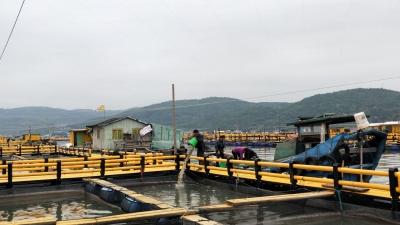 蕉城:升级改造渔排验收率达96%