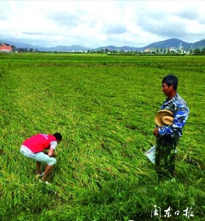 农业保险助力农村产业兴旺